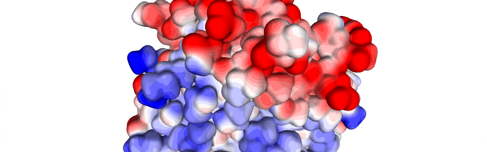 Fatty acid binding protein surface coloured by its electrostatic potential.